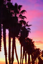 best 25 pictures of palm trees ideas on pinterest tropical