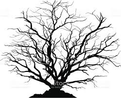 detailed silhouette of a round deciduous tree with no leaves stock