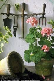 The Geranium On The Windowsill Just Died Pin By Liudmila Diana Chiriac On Muscate Pinterest Gardens