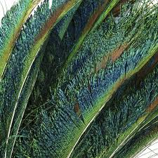 Peacock Feather Home Decor Feather Swords Natural 12 20