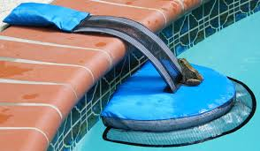 how to keep critters out of your pool