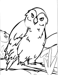 snowy owl coloring page handipoints