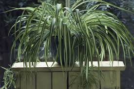 100 easy houseplants garden perfect houseplant for your home