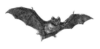 halloween black and white bats background vintage halloween cliparts cliparts and others art inspiration