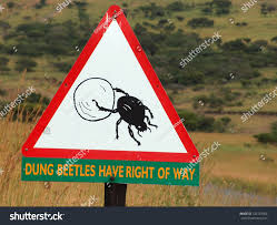 dung beetle crossing sign african national stock photo 126129566