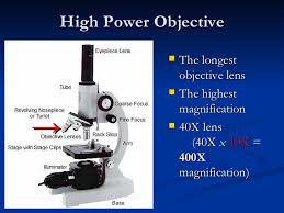 what is a light microscope used for what is the function of the objectives on a microscope
