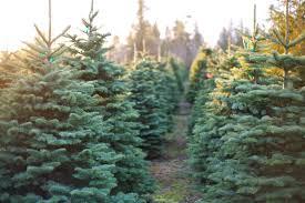 buy christmas tree places to buy christmas trees around la ca san fernando valley