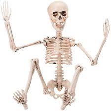 posable skeleton posable skeleton ebay