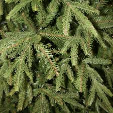 national tree 5 5ft feel real weeping spruce hinged artificial