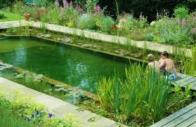 How To Make A Patio Pond Natural Pools Or Swimming Ponds U2022 Nifty Homestead