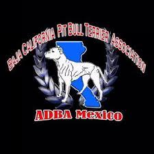american pitbull terrier merchandise american dog breeders association american pit bull terrier clubs