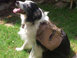 boxer halloween costume for dog dog wild rugged all terrain saddlebag backpack 4 storage pouches