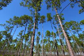Florida forest images Florida landowners help endangered wildlife jpg