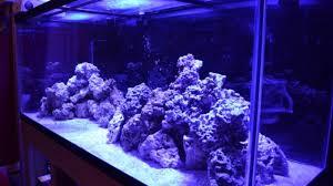 Saltwater Aquascaping My Aquascape 220 Gallon Saltwater Aquarium Mad Hatter U0027s Reef