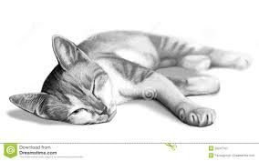 cat drawing sketch stock illustration image of fury 20247707