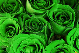 green roses green roses bouquet as background stock photo image of gift