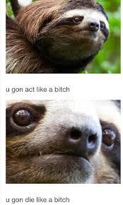 Sloth Meme Rape - 11 best rape sloth images on pinterest sloth memes sloth humor