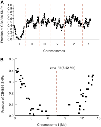 Dna Mapping Rapid Mapping And Identification Of Mutations In Caenorhabditis
