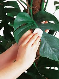 the best indoor plants the best houseplants for focal points hgtv