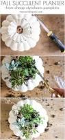 Succulent Planter Diy by How To Make Fall Succulent Planters Maison De Pax