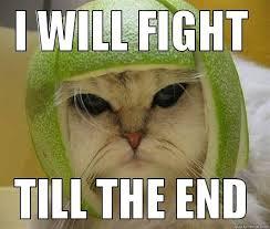 Fighting Meme - fight meme i will fight till the end picsmine