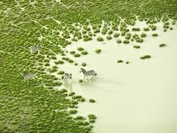 150 meters above the ground beautiful wildlife in botswana