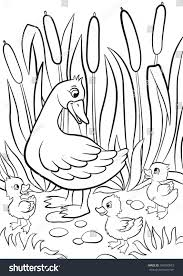 coloring pages kind duck free little stock vector 394950073