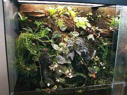 best 25 large terrarium ideas on pinterest large outdoor