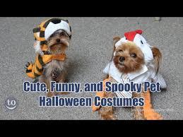 Funny Animal Halloween Costumes Funny Spooky Pet Halloween Costumes