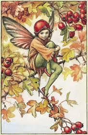 meet fairies flower fairies