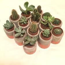 concrete succulent pot