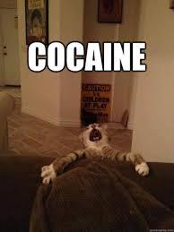 Cat Cocaine Meme - cocaine dispair cat quickmeme