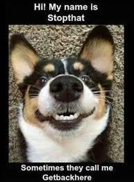 Meme Animals - 30 hilarious animal memes funoramic