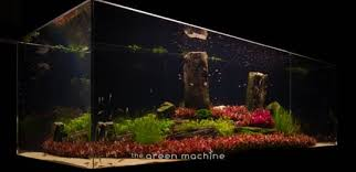 Aquascape Lighting Arizona Aquascape Journal By James Findley The Green Machine