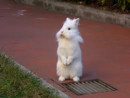 Come Costruire Una Casetta Per Conigli by Il Comportamento Del Coniglio Come Leggere Il Linguaggio Del