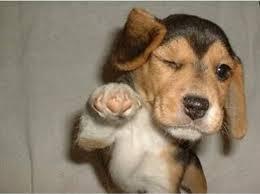 Pointing Meme - dog pointing meme generator