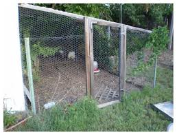 Dog Houses At Tractor Supply Raising Chickens On A Shoestring Backyard Chickens