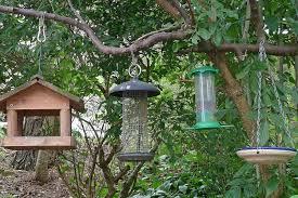 appealing how to hang a bird feeder 70 how to hang a bird feeder