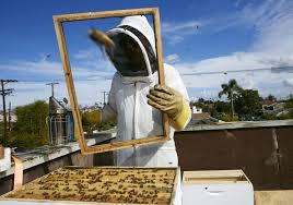 la abuzz about push for urban beekeeping the daily gazette