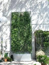 articles with metal garden wall trellis tag metal wall trellis