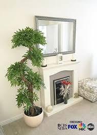 indoor palm trees indoor plants indoor palm trees