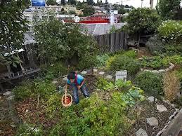 City Backyard Should Oakland U0027s Backyard Farmers Raise And Kill Animals For Food
