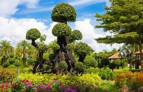 Flower Garden App by Thailand Chiang Mai Flower Festival 2rist App Travel App