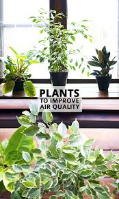 best plants for air quality best plants for apartments 100 best indoor plants 25 best peace