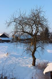 free images landscape tree nature branch snow cold light