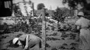 1934 women harvesting garden during depression era food shortage