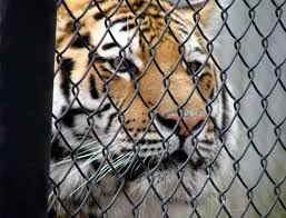 New York wild animals images Breaking news new york city bans wild animals in circuses and shows jpeg