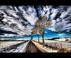 cool trees cool trees on a vanishing road on a winters day tayside flickr