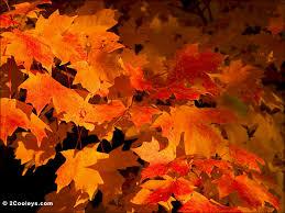 68 ozarks fall foliage photos 2cooleys leaf foliage pics