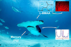 fin fin study finds shark fins meat contain high levels of neurotoxins